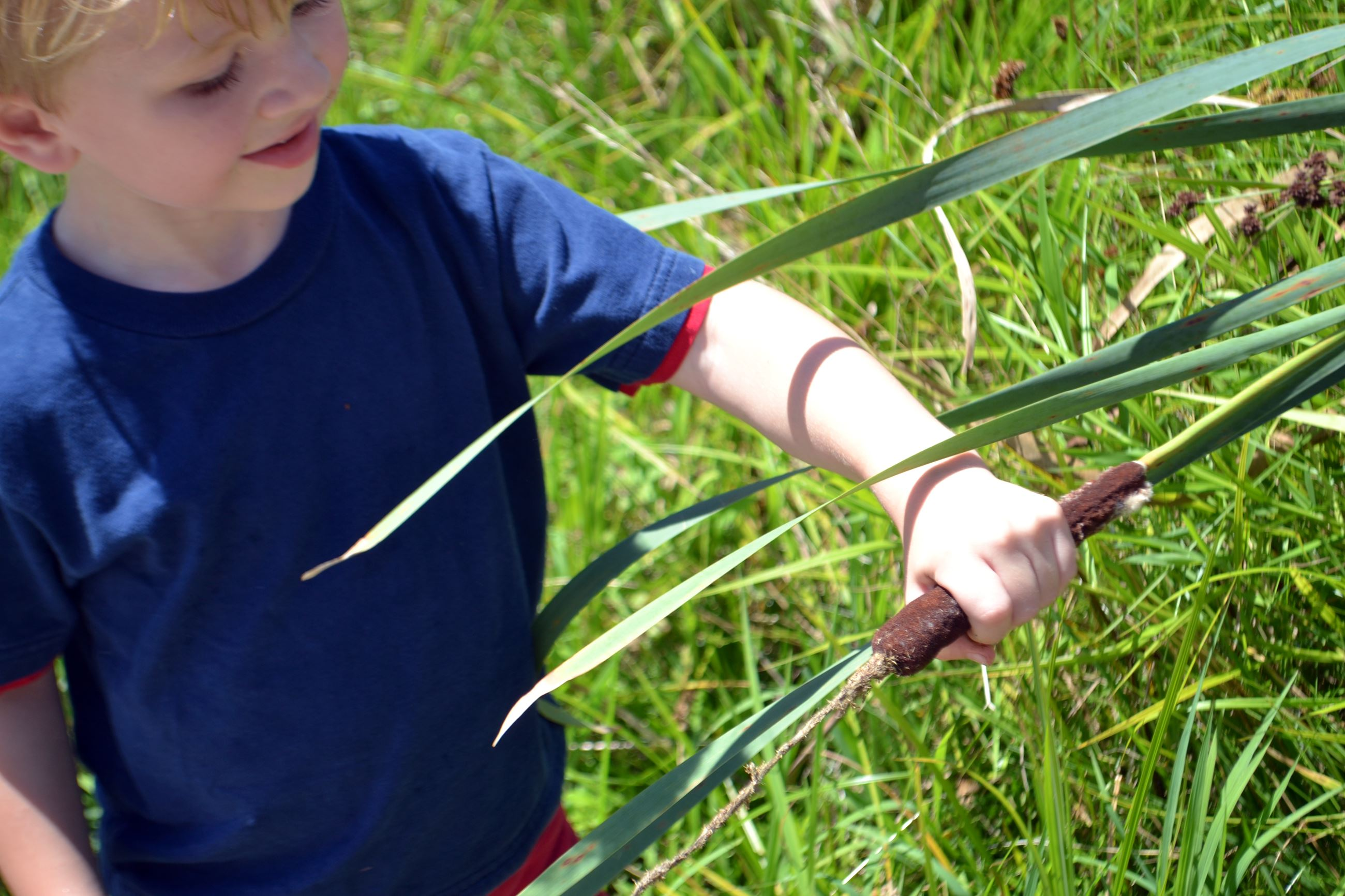Child holding a cattail